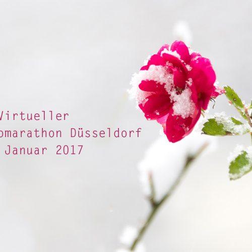 2. VFMD © Antje Terhaag