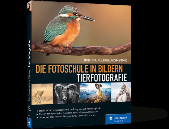 Tierfotografie. Die Fotoschule in Bildern –Buch aus dem Rheinwerk-Verlag